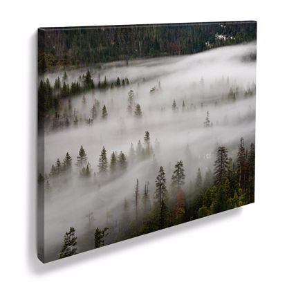 Picture of Foggy Woods - 11x14